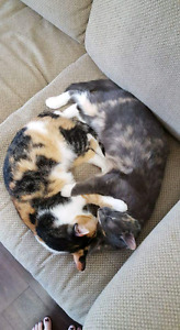 2 cats to give away. Separate or together -FREE!