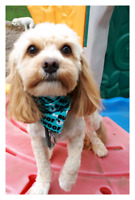 Love dogs? Professional Groomer/Animal Caretaker required