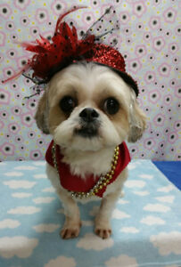 AA Pet Spa Professional Grooming