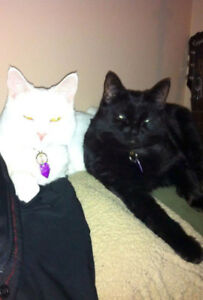 2 friendly cats need new home