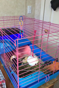 Guinea pig cage for sale make an offer