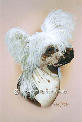 Chinese Crested  Print by Robert J. May