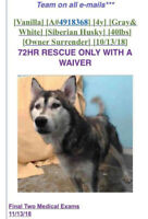 Desperately need home for husky