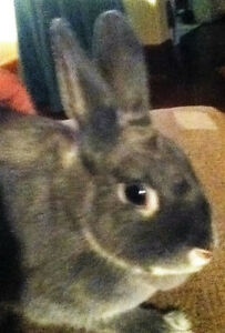 Rabbits, Cute & Adorable Bunnies $20 each to Good, Loving Home!