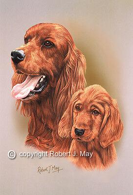 Irish Setter & Pup Print by Robert J. May