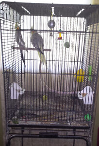 BREEDER PAIR COCKATIELS CAGE ACCESSORIES TOYS BREEDER BOX