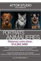 Photographie animaliere,chiens,chats/Pet,dog and cat photography