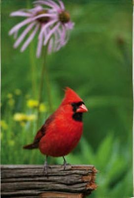 "Cardinal Summer Garden Flag Floral Decorative by Evergreen 12.5"" x 18"""