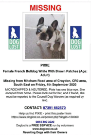Missing pied french bulldog with one blue eye!!please help!