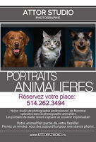 Photograpy animalieres,chiens,chats/Pet,dog and cat photography