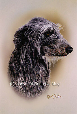 Scottish Deerhound Head Study Print by Robert J. May