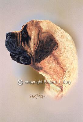Mastiff Head Study Print by Robert J. May