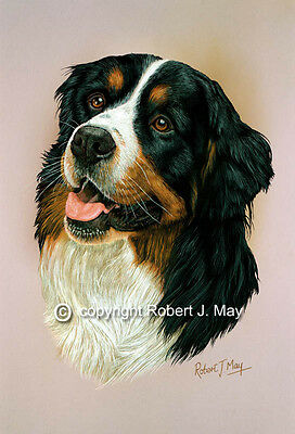 Bernese Mountain Dog Print by Robert J. May