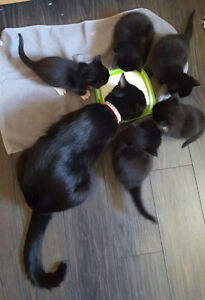 **Beautiful Kittens ready in 2 weeks**