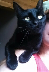 Affectionate black female needs loving companion and spay.