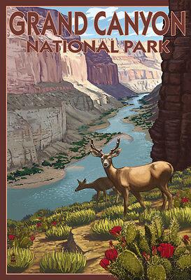 Grand CaNYon National Park, Arizona, Deer Scene Poster Print, 13x19