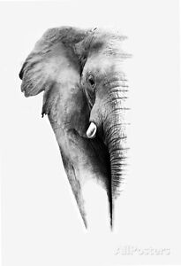 Artistic Black And White Elephant Poster Print by Donvanstaden, 13x19