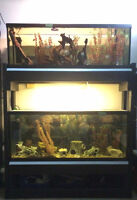 55 gallon and 40 G Long tanks excellent condition and $