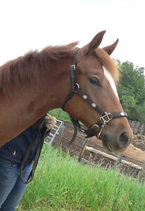 Registered Pretty appendix quarter horse yearling filly Strathcona County Edmonton Area image 2