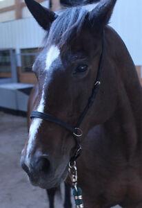 Trustworthy Trail Horse