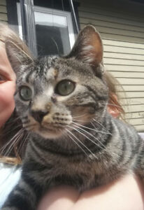 Lost cat in Ottwell area
