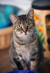 Adopt Local Cats Amp Kittens In Guelph Pets Kijiji