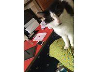 Cute lovable make kitten (LEO name) wanting lovely adorable home plz read