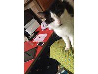 Cute little male kitten lovable fluffy long hair wants a loving caring home