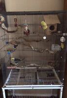 3 Cockatiels With Cage and Accessories