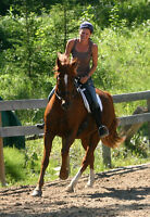 Horse available for part lease with riding lessons!