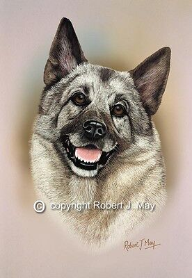 Elkhound Head Study Print by Robert J. May