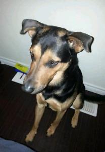 Dog still missing**( orono 115 area)