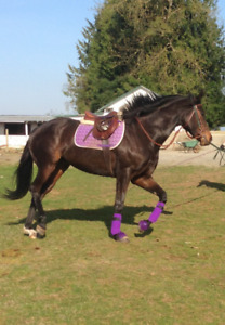 MUST SELL DUE TO HEALTH.  10YR OLD THOROUGHBRED MARE