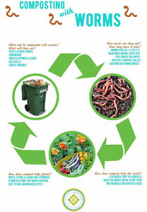 ---Red Wigglers Vermcompost Starter Kit --- Cambridge Kitchener Area image 6