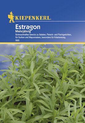 Kräuter Estragon * mehrjährig * MHD 01/21 Kiepenkerl 565