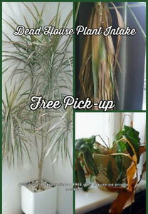 Unwanted, Dying, Indoor and Outdoor Plants Welcome
