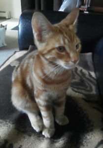 free 4 month old kitty