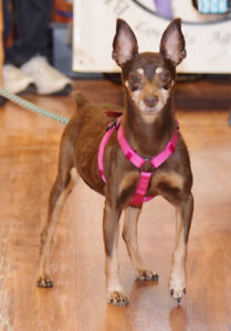 **Sweet Nana - MIN PIN cross is available for adoption***
