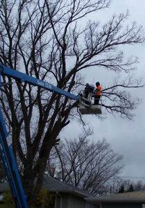 NICK'S TREE SERVICE<TRIMMING and REMOVALS 690-0276