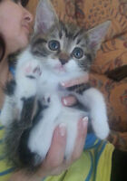 Adorable baby kittens females looking for loving homes!!!!!!!