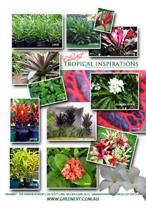 PLANT SALE | QUALITY CHEAP PLANTS DIRECT FROM THE GROWERS NURSERY North Maclean Logan Area Preview