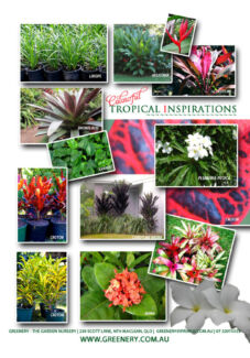 PLANT SALE! CHEAP PLANTS ON SALE - DIRECT FROM THE GROWER North Maclean Logan Area Preview