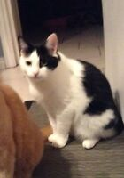Missing Cat in Quispamsis