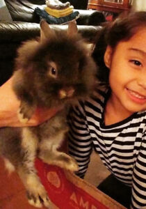 Rabbit 4 month old for sale