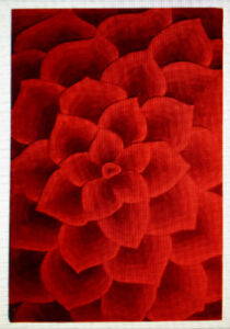 Rose Tufted Rug from Pier 1 Imports
