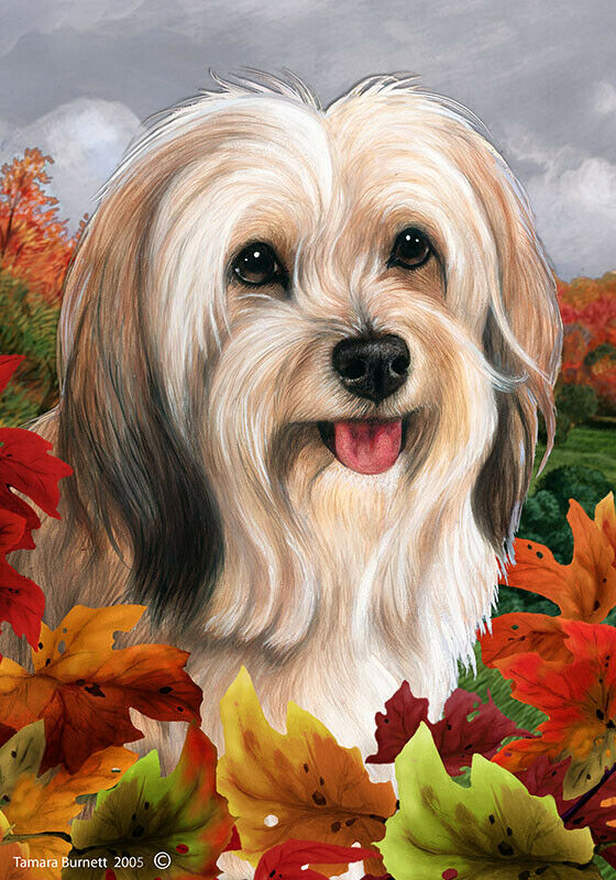 Fall House Flag - Cream Sable Tibetan Terrier 13479