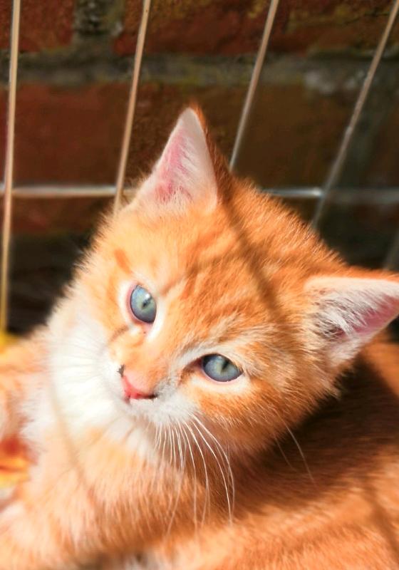 Kittens For Sale In Four Winds Belfast Gumtree