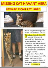 MISSING CAT REWARD ON OFFER