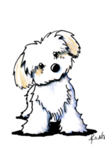 Looking for small  - medium (Puppy)