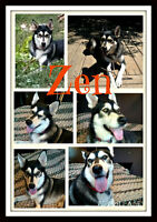 BEAUTIFUL ZEN NEEDS A LOVING HOME WITH A BUDDY